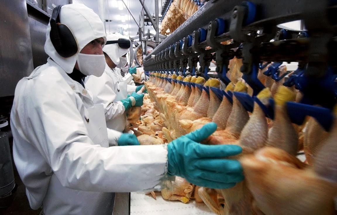 Прогноз роста производства мяса птицы